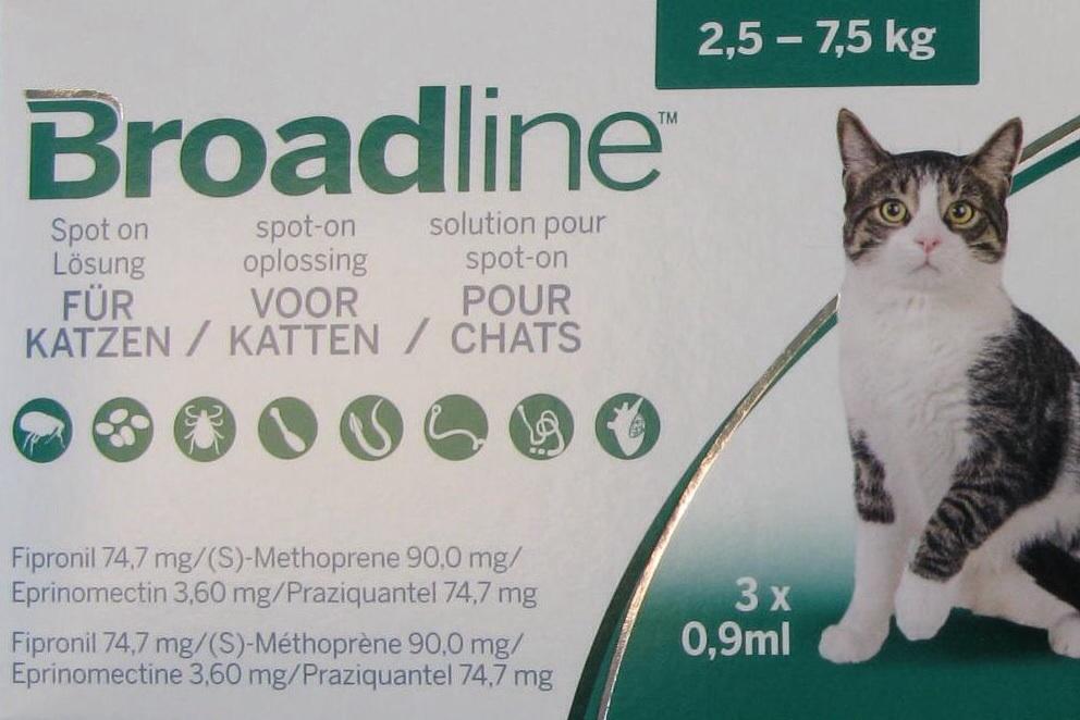 Dierenarts De Laak in Vathorst | Vlooienbehandeling kat pipetten tekenbehandeling