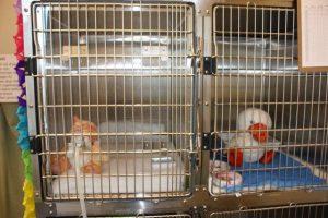 Opname met zuurstofkooi voor benauwde dieren bij Dierenarts De Laak dierenkliniek in Vathorst