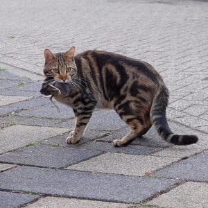 Je kat wel of niet naar buiten? Dierenarts De Laak dierenkliniek in Vathorst Amersfoort.