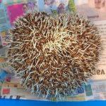 Witbuikegel bij Dierenarts De Laak dierenkliniek in Vathorst Amersfoort