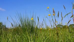 Gras is groen. | Dierenarts De Laak dierenkliniek in Vathorst Amersfoort