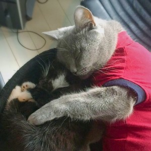 Body voor kat of hond bij Dierenarts De Laak