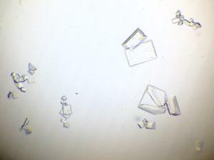 Blaasgruis of Struviet kristallen behandelen bij kater bij Dierenarts De Laak dierenkliniek in Amersfoort Vathorst